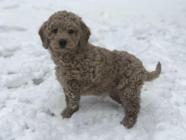 Birdee playing in the snow